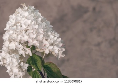 Flower small under images stock photos vectors shutterstock hydrangea common names hydrangea or hortensia close up white flowers in a garden mightylinksfo