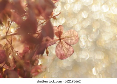hydrangea flower on a bright sunny yellow background