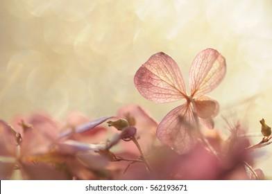 hydrangea flower on a bright sunny background