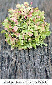 Hydrangea flower on wooden background