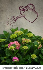 Hydrangea flowers against a wall with the drawing of a watering can