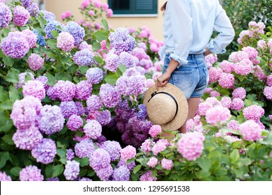 Hydrangea garden. Girl is in bushes of hortensia. Flowers are pink, blue, lilac and blooming in town streets by house. Young woman in denim shorts, straw hat. Countryside life style, gardening.