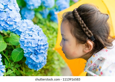 Hydrangea and girl