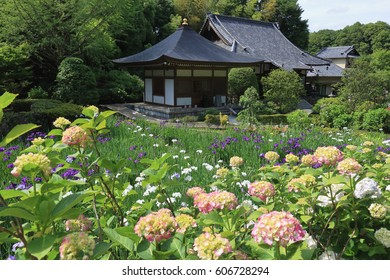 Hydrangea grouping in a temple