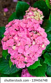 Hydrangea like the cold weather.
