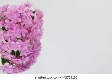 hydrangea in purple color