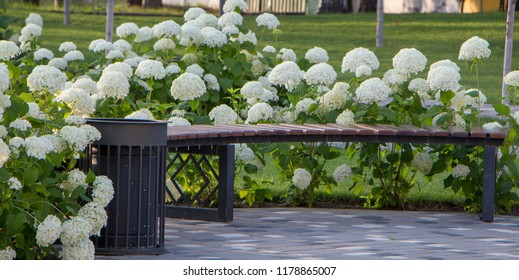 Hydrangea tree, white.Bush blooming on a green background.