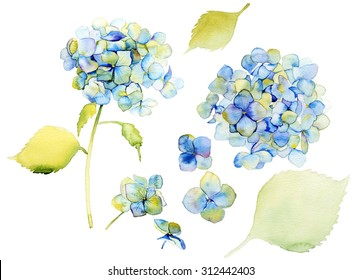 Hydrangea, watercolor, flowers, cards, set. Design element isolated on white background