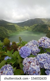 Hydrangeas flowers on the volcano