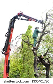 A hydraulic crane truck to pick up debris tree branches from a tree which cutting down by was cut down. Tree service in asia city.