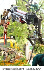 A hydraulic crane truck to pick up debris tree branches which cutting down by a wood cutter on the tree. Tree service in asia city.