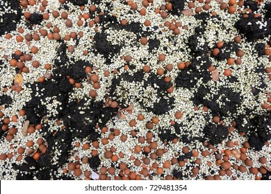 Hydro clay or popper clay and perlite substitute soil suitable for hydroponic plant