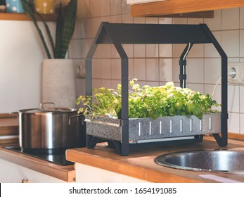 hydroponic grown herbs and vegetables in own kitchen with hydroponic grow kid