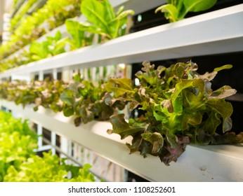 hydroponic plant in indoor garden
