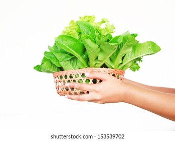 Hydroponic vegetable  on hand