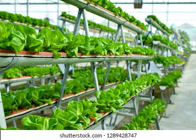 Hydroponic vertical farming systems