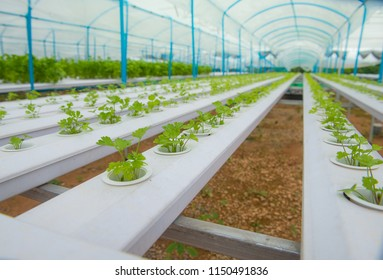 Hydroponic vetgetable farm, Another alternative for farmer in the future.