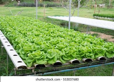 hydroponics farm household