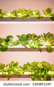 a Hydroponics in growing technology