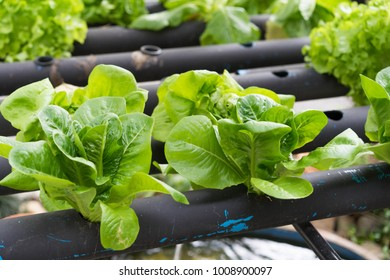 Hydroponics In the pipeline