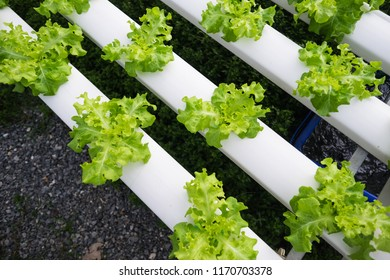 Hydroponics is a subset of hydroculture, the method of growing plants without soil, using mineral nutrient solutions in a water solvent