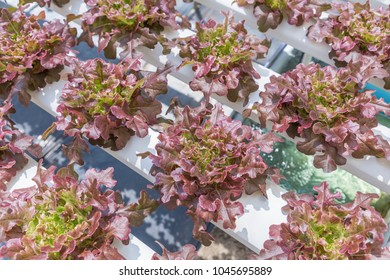 Hydroponic Design Stock Photos, Images & Photography   Shutterstock