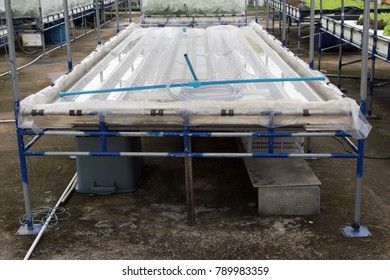 Hydroponics vegetable farm. Fresh hydroponics vegetable farm, Salads vegetable hydroponics farm.