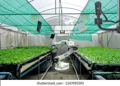 Hydroponics vegetable garden on smart greenhouse that installed industry robotic for worked and harvesting, and also installed a CCTV camera for keep data and prevent theft, Smart farming 4.0 concept