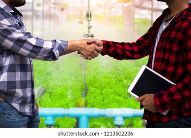 Hydroponics vegetable growers shaking hands with customers in the hydroponics vegetable garden after negotiating a successful The concept of organic agriculture is delivered straight to the customer.