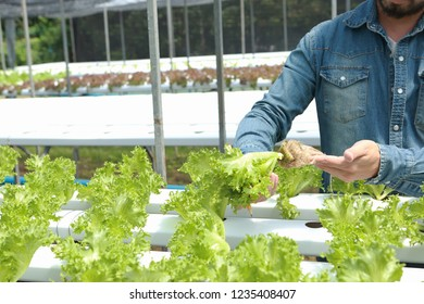 Hydroponics vegetable owners are investigating and documenting the growth of vegetables.