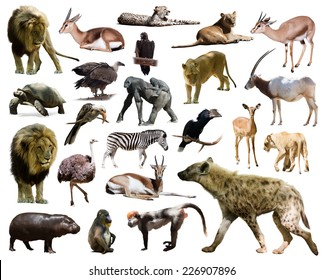 hyena and other African animals. Isolated on white background