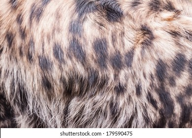Hyena pattern or texture or background or skin
