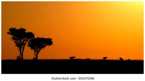 Hyenas horizon