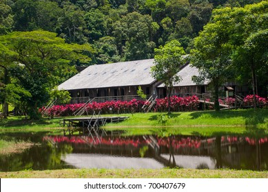 Iban longhouse. Traditional wooden houses and bushes of red color in the Kuching to Sarawak Culture village. Borneo, Malaysia
