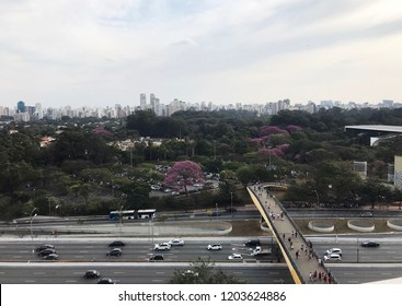 Ibirapuera Park View