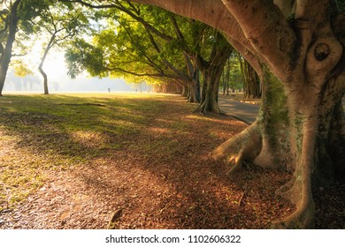 Ibirapuera trees in the morning