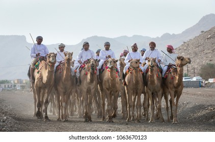 Ibri, Oman, April 7th, 2018: omani men riding  camels in a countryside of Oman