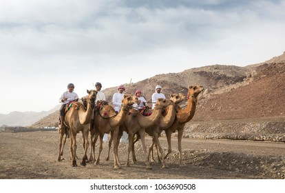 Ibri, Oman, April 7th, 2018: Omani men riding camels in a landscape of rural Oman