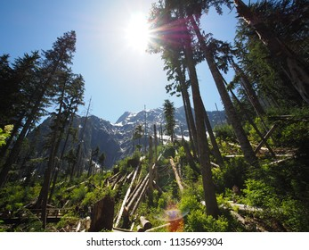 Ice Cave hiking trail in Washington State, USA
