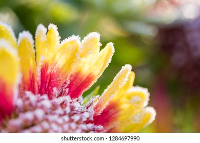 ice covered blossom