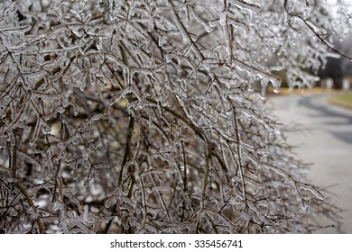 Ice Covered Branches with a Road in the Background