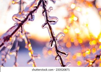 Ice covered branches shimmering softly during a Winter's evening