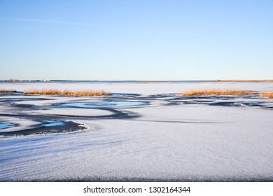 Ice covered coastline with reeds by the coast of the swedish island Oland in the Baltic Sea