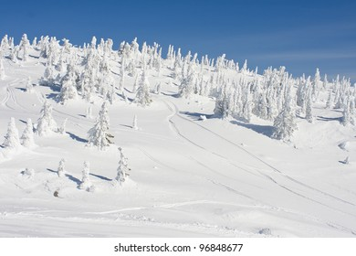 Ice Covered Forest at Mountain Summit