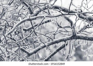 Ice covered tree limbs from an ice storm in February 2021 in Virginia. Icicles are forming from freezing rain.