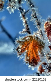 Ice Crystals on leaf