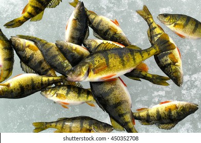 Perch Ice Fishing Images, Stock Photos & Vectors | Shutterstock