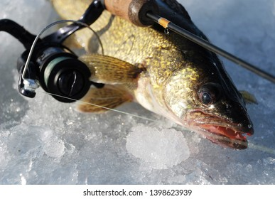 ice fishing for walleye in Canada