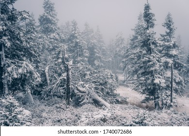 Ice forest in the Upper Harz National Park