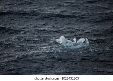 ice and iceberg floating on the water, antarctic peninsula, antarctica